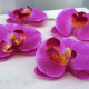 Wedding hair accessories Fuchsia orchid bridal hair pins