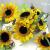 sun_flower_cake_topper_3.jpg